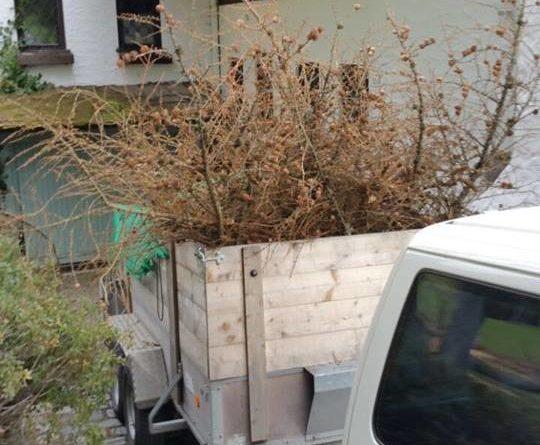 Entsorgung von Gartenabfällen